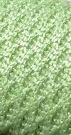 <b>Polyester</b>