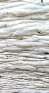 Coton organique